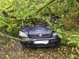 Drzewa spadały na auta. Ponad 50 interwencji strażaków z Goleniowa i okolic