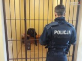 Policjanci z Kalet namierzyli włamywacza z Piekar. To nie był koniec jego kłopotów