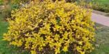 Kolorowa jesień w ogródkach działkowych w Zagłębiu