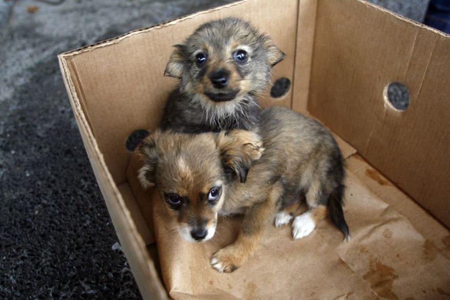 Najnowsze 90 psów do adopcji ze zlikwidowanej hodowli. Zwierzaki czekają na PZ64