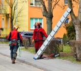 Wycinane są drzewa na terenach Łowickiej Spółdzielni Mieszkaniowej. W ich miejsce pojawią się nowe