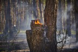 Powiat nowotomyski: Piątek w ogniu. Płonął las oraz trawy [ZDJĘCIA]