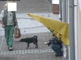 Wyższe mandaty dla właścicieli psów. W Wejherowie straż miejska na razie stawia na edukację