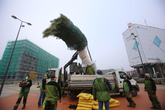 W czwartek, 5 listopada, palmy z rynku w Katowicach są wywożone do hali Katowickich Wodociągów