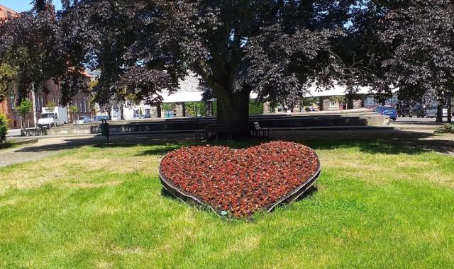 Chełmno ustrojone kwiatami i zielenią kwitnie i zachwyca gości, ale też mieszkańców