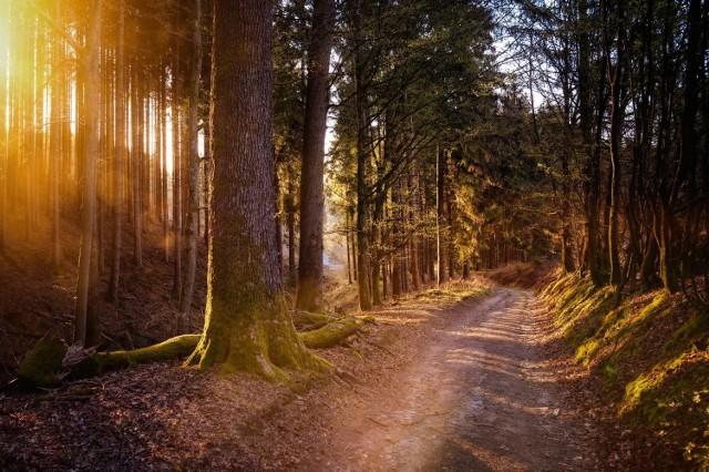 W lasach w okolicach Słubic wykonywane są chemiczne opryski. Zakaz wstępu obowiązuje do 15 maja