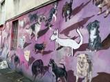 Wrocław. Bajkowe murale na Nadodrzu. Zobacz koniecznie!