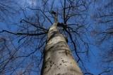 Ostrzeżenie o silnym wietrze dla województwa opolskiego