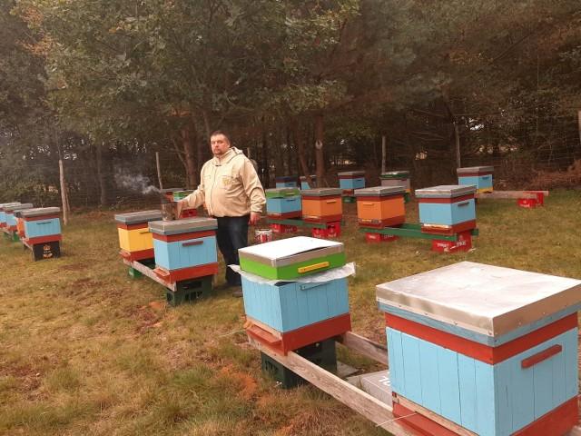 Pszczelarz Artur Burakiewicz ma w swojej pasiece 34 ule
