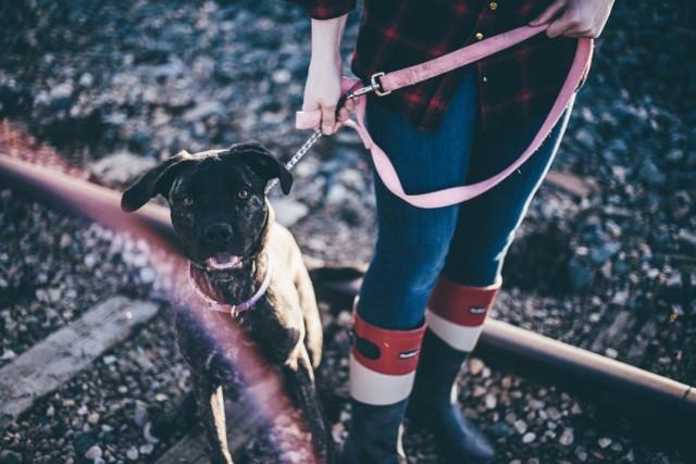 Macie psy? Zdawaliście sobie sprawę z pewnych obowiązków? Niektórzy niestety zapominają, chociażby o tym, że wychodząc z psem na spacer, powinien być on na smyczy. Niewiele osób sprząta też po swoich pupilach, a za to grozi mandat. Możemy  zapłacić nawet do 500 zł.   Czytaj więcej na kolejnych stronach >>>>  Zobacz też: Psy do adopcji z toruńskiego schroniska Bieg z psami na rzecz toruńskiego schroniska