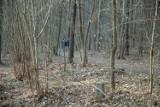 Gdzie do lasu w Białymstoku? Białystok i tereny zielone - TOP 10. Wśród nich są też lasy miejskie. Niektóre z nich to rezerwaty