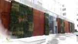 Firma Greenarte z Gliwic to specjaliści od zielonych ścian. Pionowe ogrody zdobią centra miast