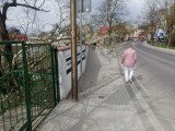 Konar przegrodził chodnik w centrum Goleniowa. Usuną dopiero jutro