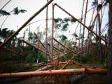 Nawałnica z 2017 roku w powiecie żnińskim. Tak wyglądał wtedy las pod Rogowem [zdjęcia]