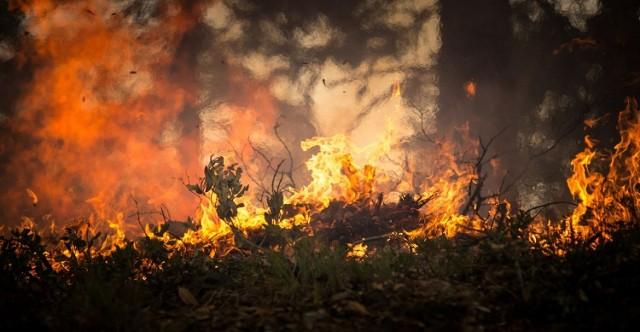 Strażak podpalał Puszczę Kampinoską. Jest odpowiedzialny za przynajmniej 4 pożary