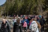 """Tłumy turystów w Dolinie Chochołowskiej. """"To prawdziwe oblężenie"""" [ZDJĘCIA]"""