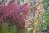 Osiedla w Sieradzu pełne zieleni i kolorów. Zobacz jak się zrobiło pięknie (zdjęcia)