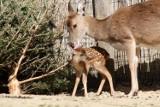 Nie ma jak u mamy, czyli zwierzaki ze swoimi mamami w Naszym Zoo! [ZDJĘCIA]