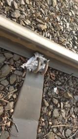 Sadyści z Wrocławia. Okrutne dzieci przywiązały gołębia do torów tramwajowych (DRASTYCZNE ZDJĘCIA)