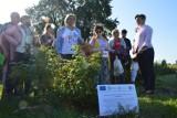 Rolnicy z województwa łódzkiego na Lubelszczyźnie poznali tajniki agroleśnictwa