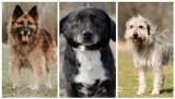 Leszno. Kilkadziesiąt psów ze schroniska w Henrykowie czeka na adopcję. Może jeden z nich znajdzie u Was dom? [ZDJĘCIA]