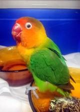 Papuga z myślami samobójczymi? Nietypowa akcja Ekopatrolu