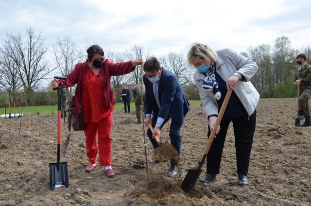 Pierwsze sadzonki starych odmian jabłoni trafiły do ziemi na terenie ŁODR w Bratoszewicach.