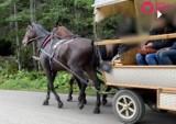 Poszukiwania kulawego konia z Morskiego Oka. Animalsi dostali film od turystki