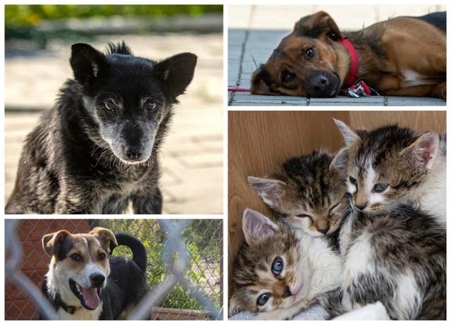 Oto urocze zwierzaki, które czekają na nowy dom i kochającego człowieka.