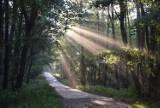 Dzień wstaje nad Jeziorem Paprocańskim i w paprocańskich lasach ZDJĘCIA