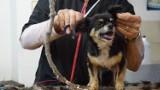 TOP 10 psich fryzjerów we Włocławku według opinii użytkowników Google
