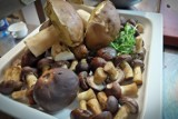 W tych miejscach w powiatach włocławskim i lipnowskim warto wybrać się na grzyby