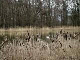 Kwiecień w zbąszyńskim parku [Zdjęcia]