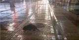 Bóbr wędrował po centrum Kielc. Przechodnie chcieli mu robić zdjęcia [WIDEO]
