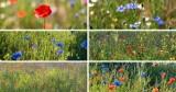Zachwycające łąki kwietne w Szczecinie w pełnym rozkwicie. Zobacz ZDJĘCIA
