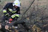 AKTUALIZACJA: Zerwane dachy i połamane drzewa to efekty czwartkowych wichur [ZDJĘCIA]