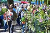 Stare Pole. Wiosenne Targi Ogrodnicze przyciągały tłumy [ZDJĘCIA]. Oby za rok odbyły się już bez problemu