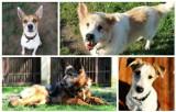Psy z poznańskiego schroniska czekają na adopcję. Znajdź wśród nich najlepszego przyjaciela!