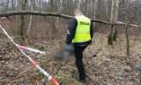 W lesie w miejscowości Graby znaleziono zwłoki mieszkańca Wrześni