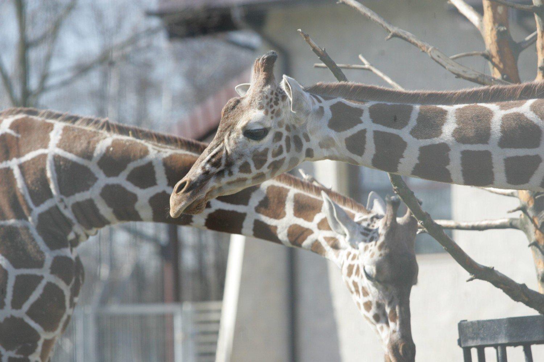 Piekary Mają Umowę Z Zoo Naszemiastopl