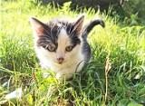 Malbork. Słodkie kocięta z Reksa potrzebują opiekunów na stałe. Może kocie dzieci skradną czyjeś serce?