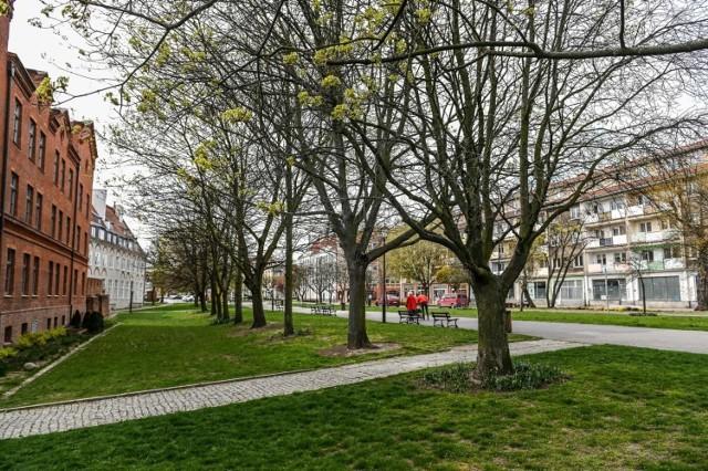 Zakaz wycinki drzew na Podwalu Staromiejskim uchylony