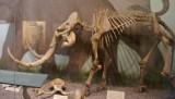 Pół wieku temu odkryto w Krakowie cmentarzysko mamutów. Do dziś miasto nie udostępniło znaleziska