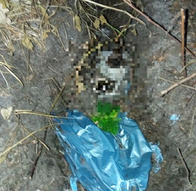 Makabryczne odkrycie - zakopany pies w Ustce.