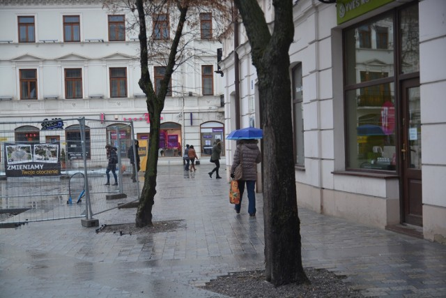 Drzewa w centrum miasta. Strata bezpowrotna?