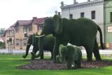 Trzy radwanickie słonie mają wreszcie imiona. To Radwanek, Buczynka i Jakubek!