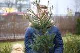 Co zrobić z choinką po świętach w Wągrowcu, Skokach, Gołańczy?