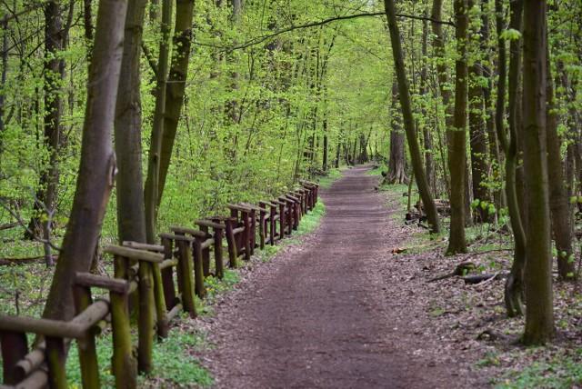 """Jeden z najpopularniejszych miejskich lasów w stolicy zachwyca różnorodnością gatunków drzew rosnących tam. Występuje tam niemal 400 gatunków roślin i blisko 40 gatunków ptaków. Poza wędrówką wśród drzew można podziwiać tam Kościół Niepokalanego Poczęcia Najświętszej Marii Panny. Na tym terenie płynie również rzeka Rudawka.  Powierzchnia Lasu Bielańskiego to 151,83 ha, obejmuje on teren rezerwatu """"Las Bielański"""".  Poza pieszymi szlakami znajdziemy tam wąwozy i skarpy, Park Linowy Bielany oraz plac zabaw."""