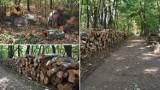 Mieszkańcy Mościc oburzeni wycinką drzew w Lesie Sośnina [ZDJĘCIA]