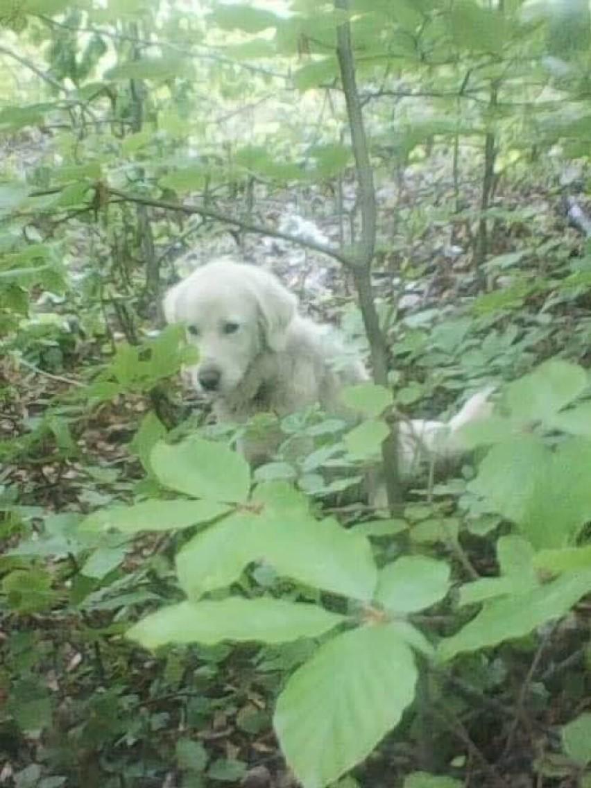 Tego psa kilka dni temu w lesie w okolicy Czerwieńczyc...